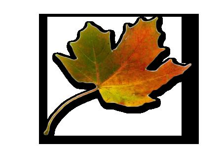 Fall Sermon Series: A FaithFULL Life